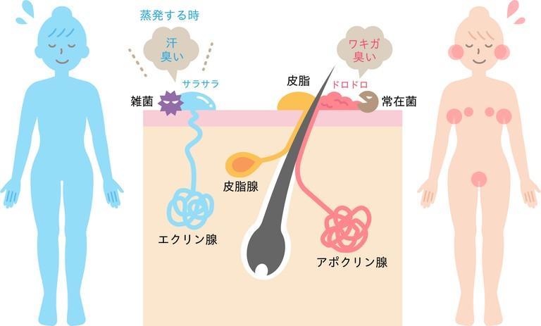 体臭の種類